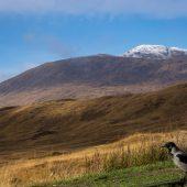 scozia on the road glencoe loch tulla