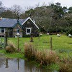 Isola of Mull Lochbuie Scozia cottage con pecore