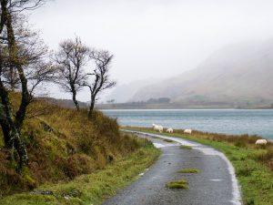 Isola di Mull Loch Spelve pecore scozia