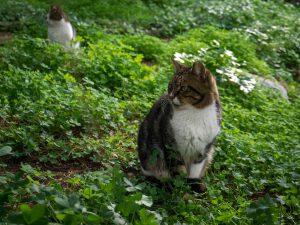Atene gatti piedi acropoli plaka grecia