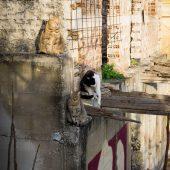 Atene gatti su edificio abbandonato anafiotika grecia