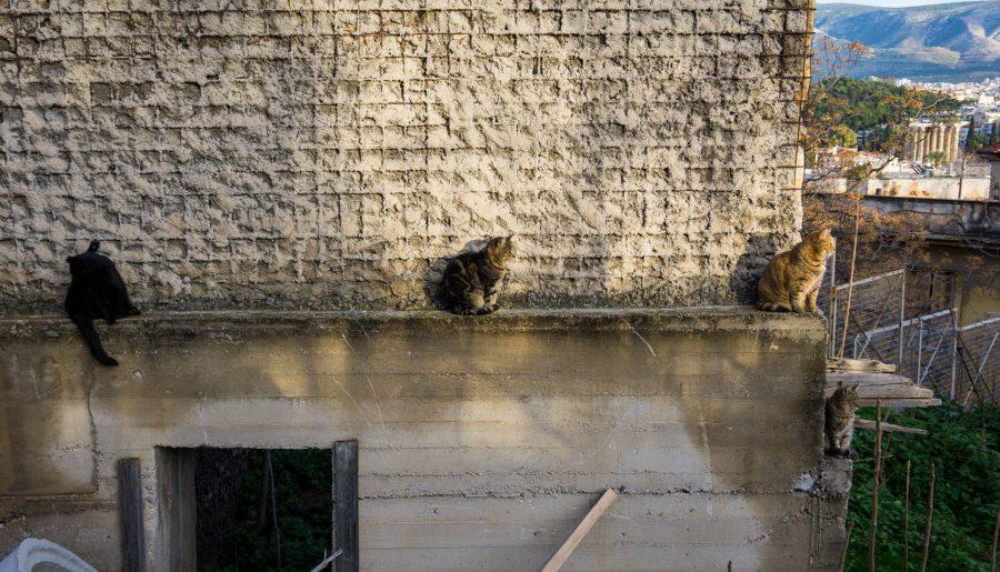Atene gatti su edificio abbandonato anafiotika sfondo agora grecia