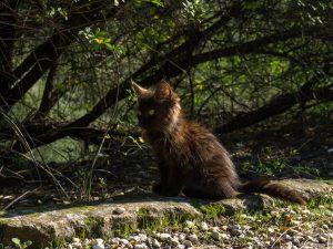 Atene gattino nero antica agora grecia