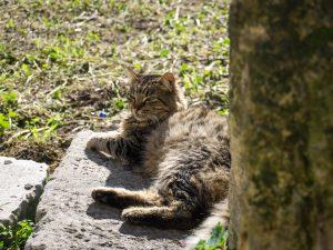 Atene gatto al sole antica agora grecia