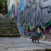 Atene gatto che scende scale anafiotika grecia