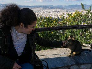 Atene gatto cima collina licabetto grecia