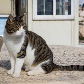 Atene gatto dentro Acropoli grecia