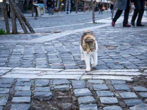 Atene gatto fermata metro Acropoli grecia