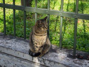 Atene gatto ingresso Acropoli sud grecia