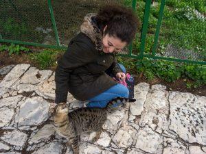 Atene gatto piedi acropoli plaka grecia