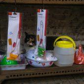 Atene gatto su mensola negozio monastiraki grecia