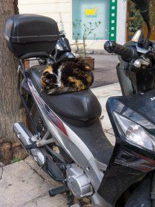 Atene gatto su motorino museo acropoli grecia