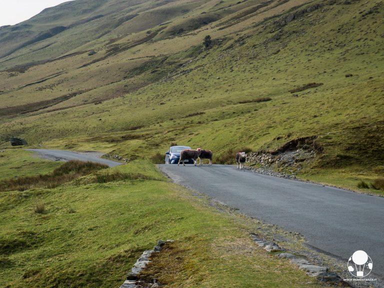 inghilterra guida a sinistra pecore lake district