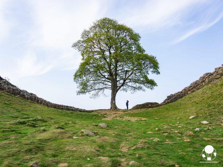 robin hood tree vallo di adriano roman wall inghilterra