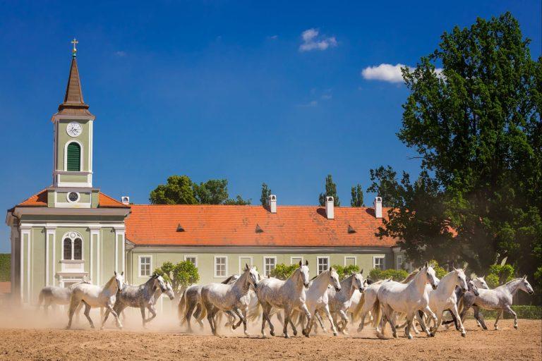 scuderia più antica al mondo cavalli corti reali kladruby nad labem