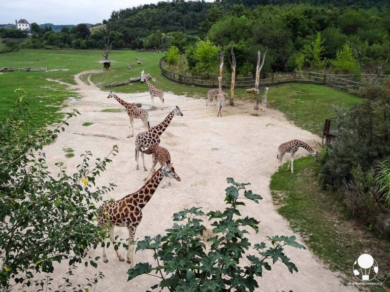 praga-giardino-zoologico-padiglione-africa-giraffe-berightback