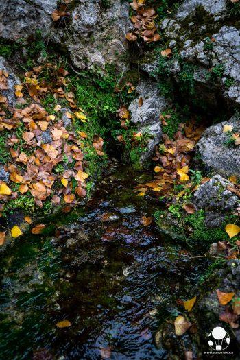 Le Fonti del Fiume Clitunno sono all'interno di un parco che raccoglie le sorgenti sotterranee in un lago