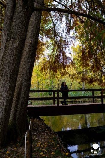 Le Fonti del Fiume Clitunno sono all'interno di un parco dove rilassarsi e fare una passeggiata